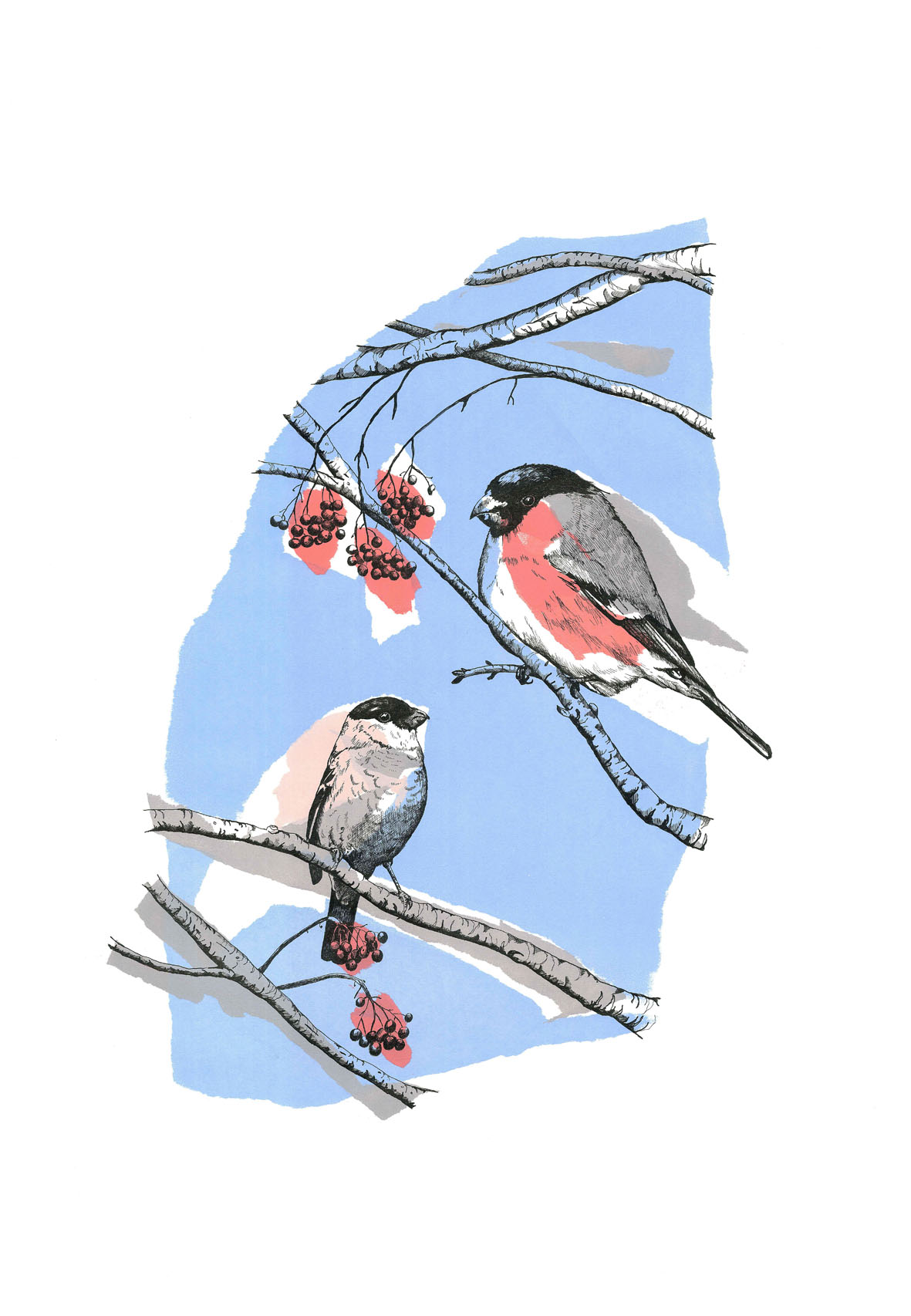 ''Bullfinch Love' - Original Screenprint with Pen and Ink ' by artist Joanna Mcdonough