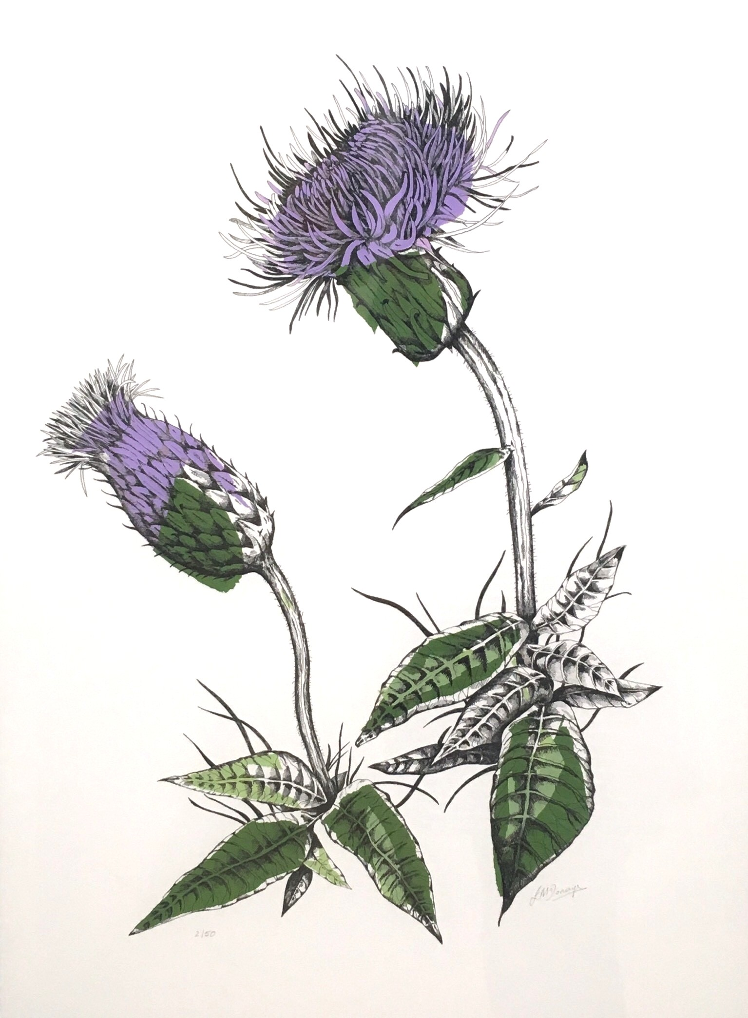 'Melancholy Thistle' by artist Joanna Mcdonough
