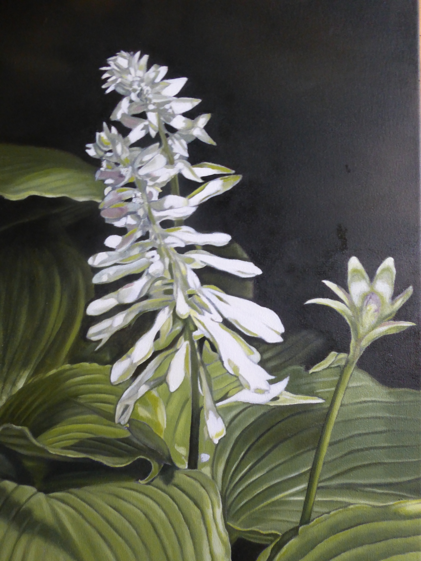 'Hosta I' by artist Ellisa Haldenby