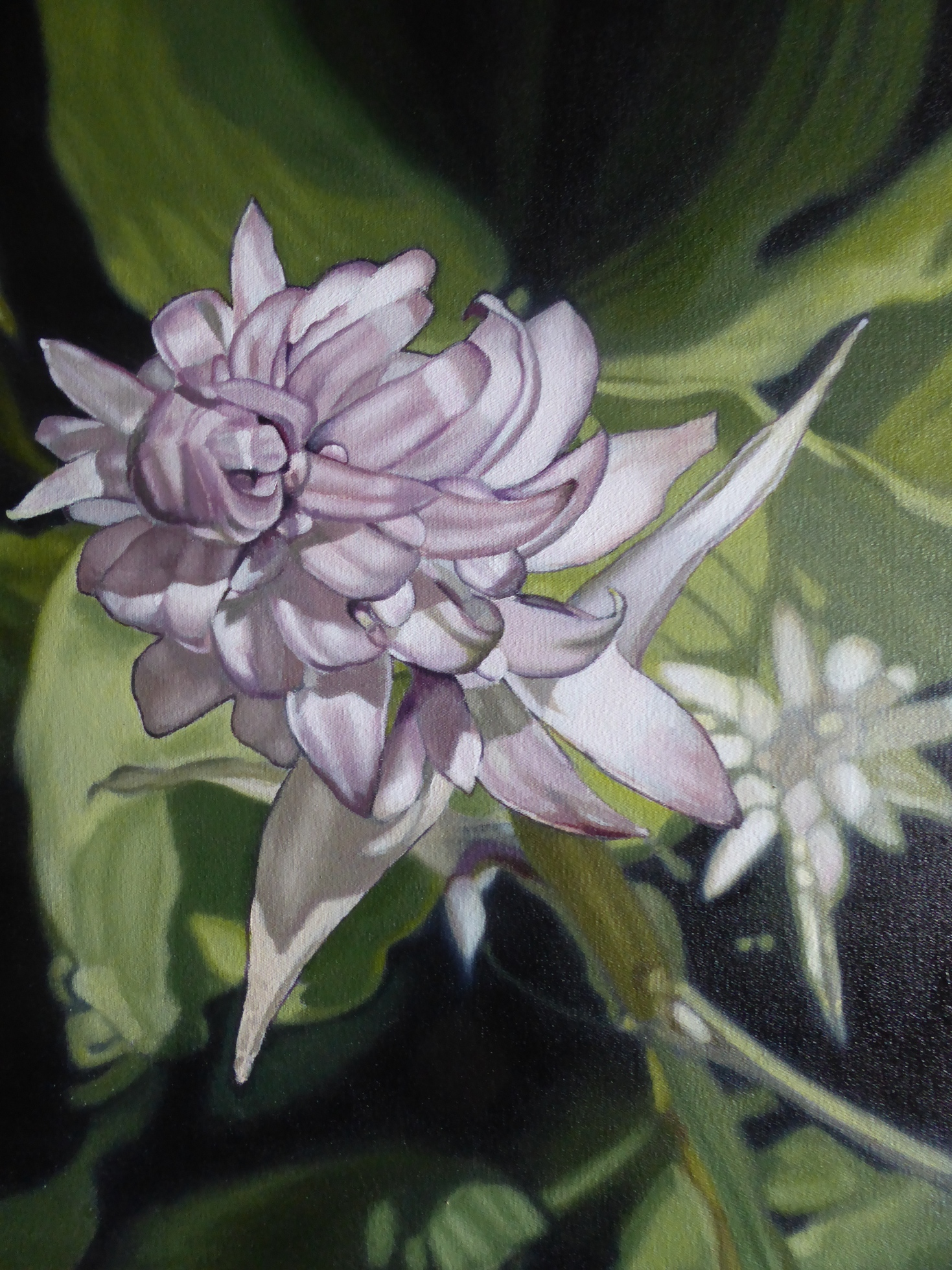 'Hosta II' by artist Ellisa Haldenby