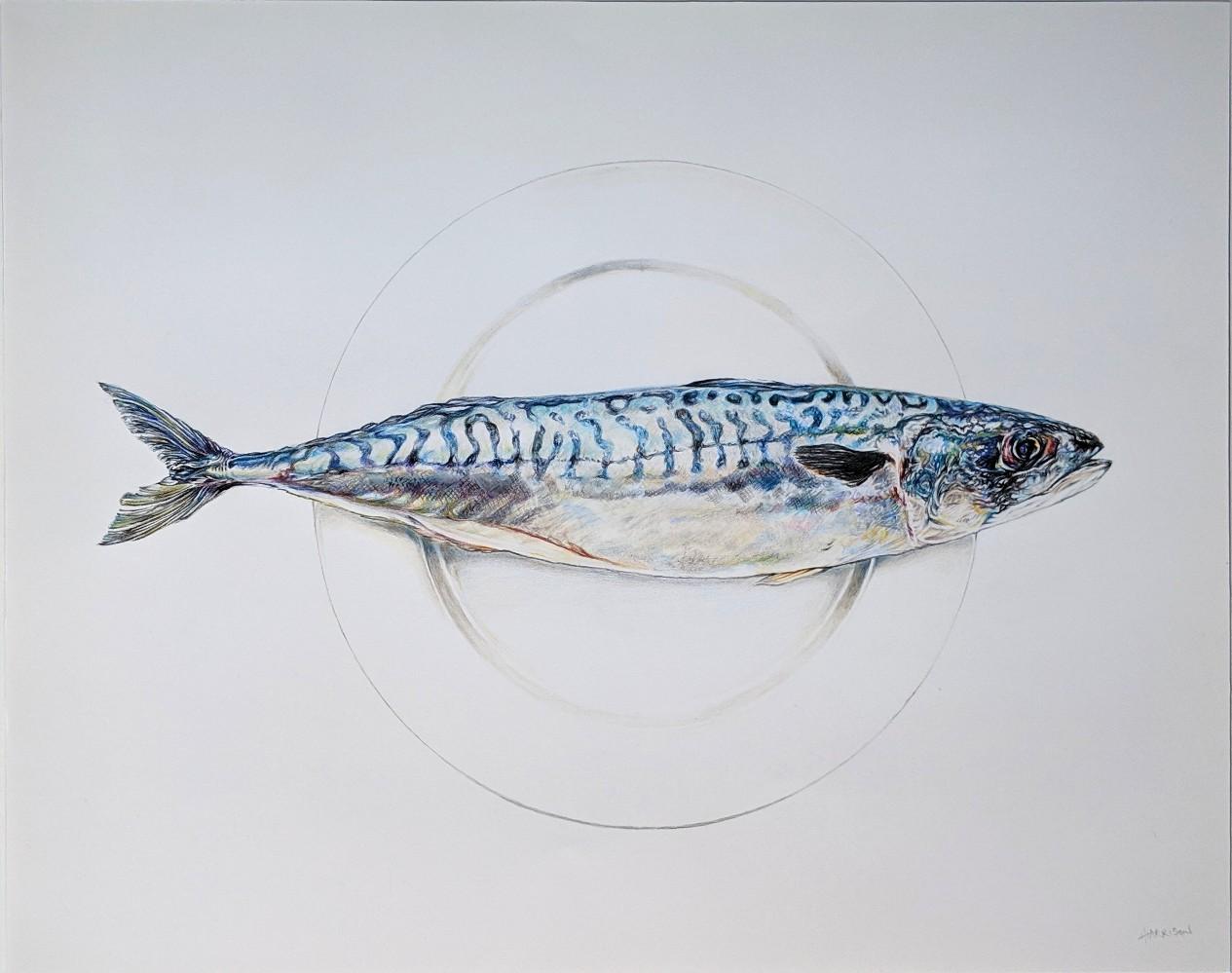 'Mackerel' by artist Harry Harrison